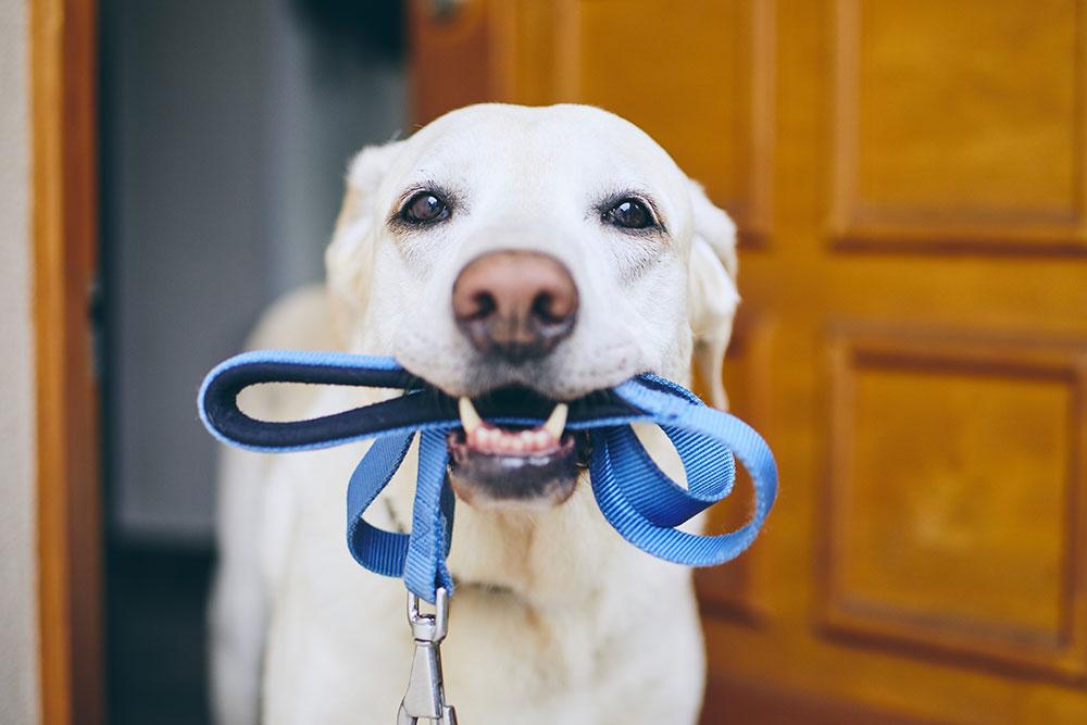 dog ready for walk